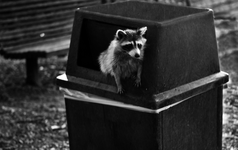Local Monument Honors Raccoon